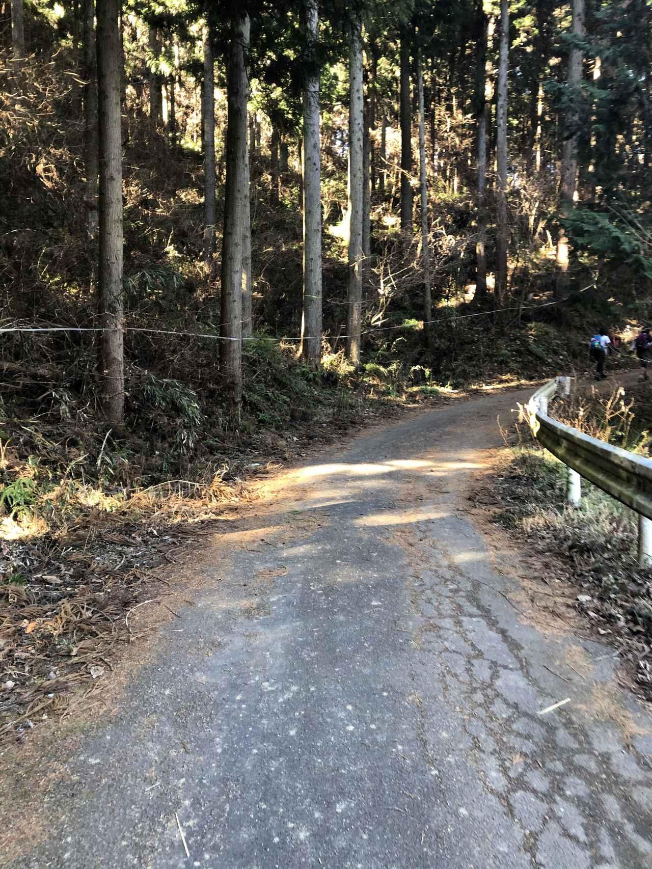 画像4: 宝登山の蝋梅(ロウバイ)|見頃・アクセス・登山道を紹介【登山・ハイキング初心者におすすめ】
