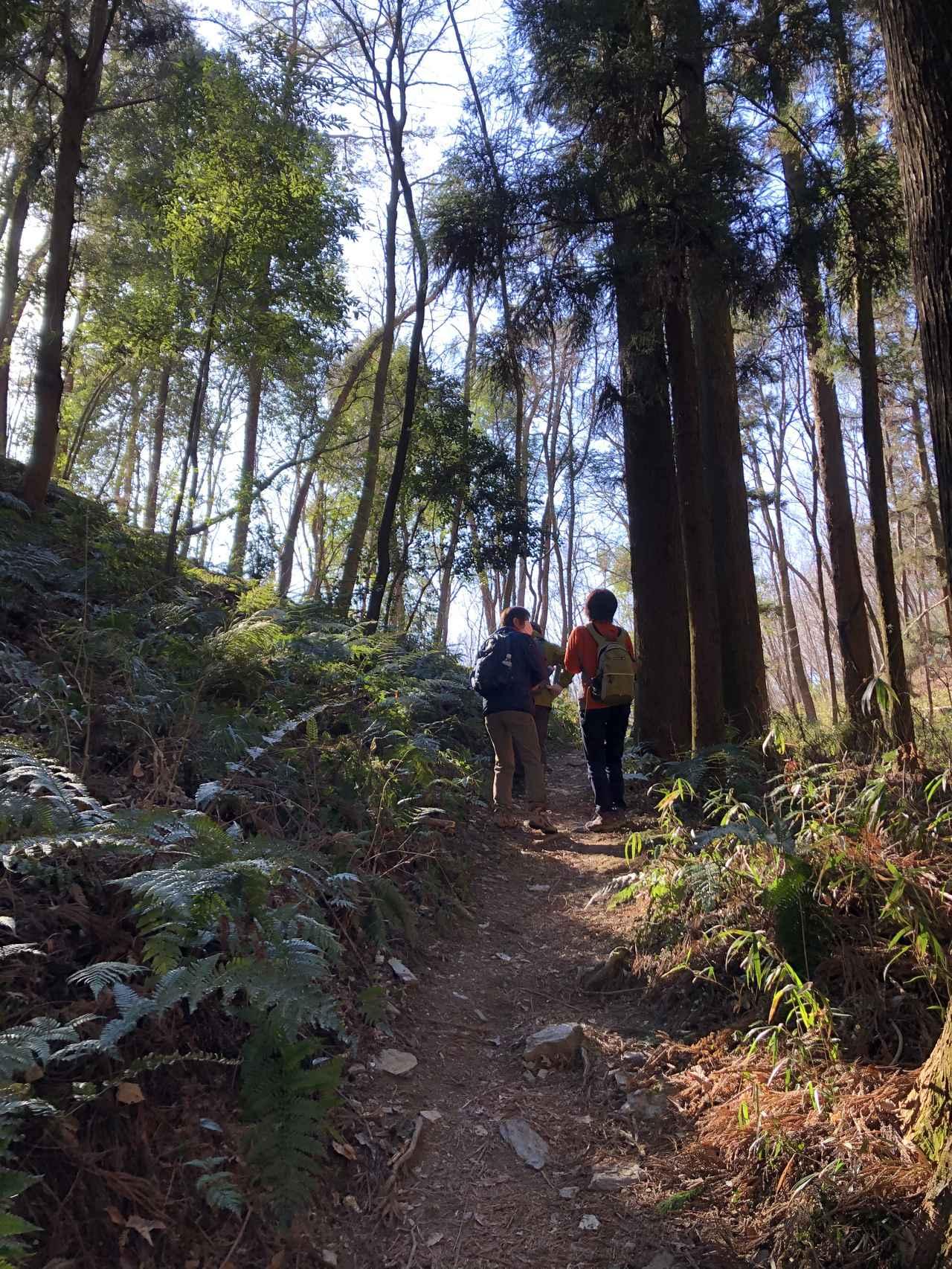 画像2: 宝登山の蝋梅(ロウバイ)|見頃・アクセス・登山道を紹介【登山・ハイキング初心者におすすめ】