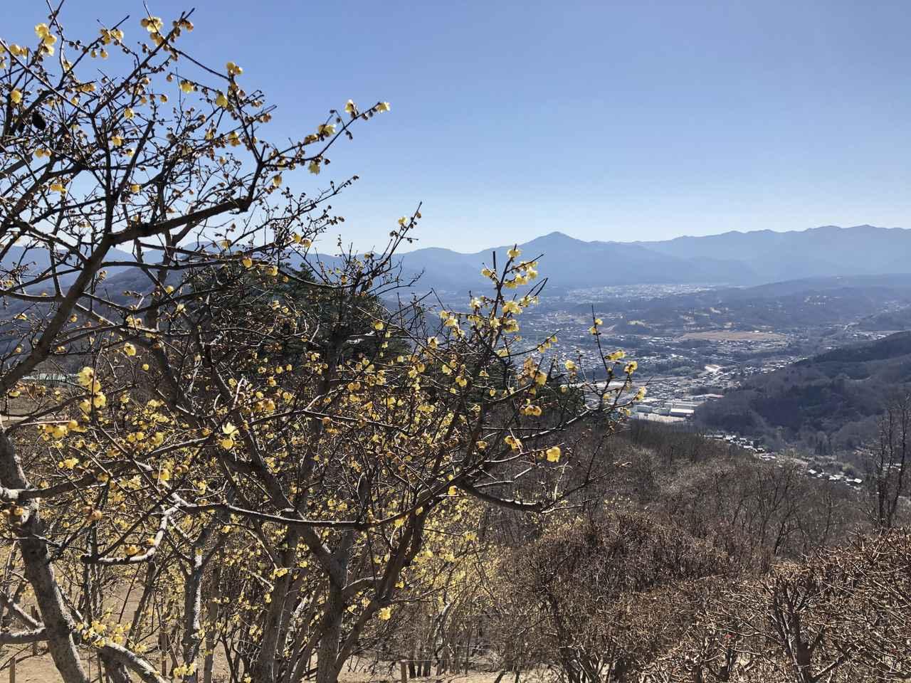 画像: ろうばいと武甲山(武甲山は写真中央の1つ頭が飛びぬけた尖った山)