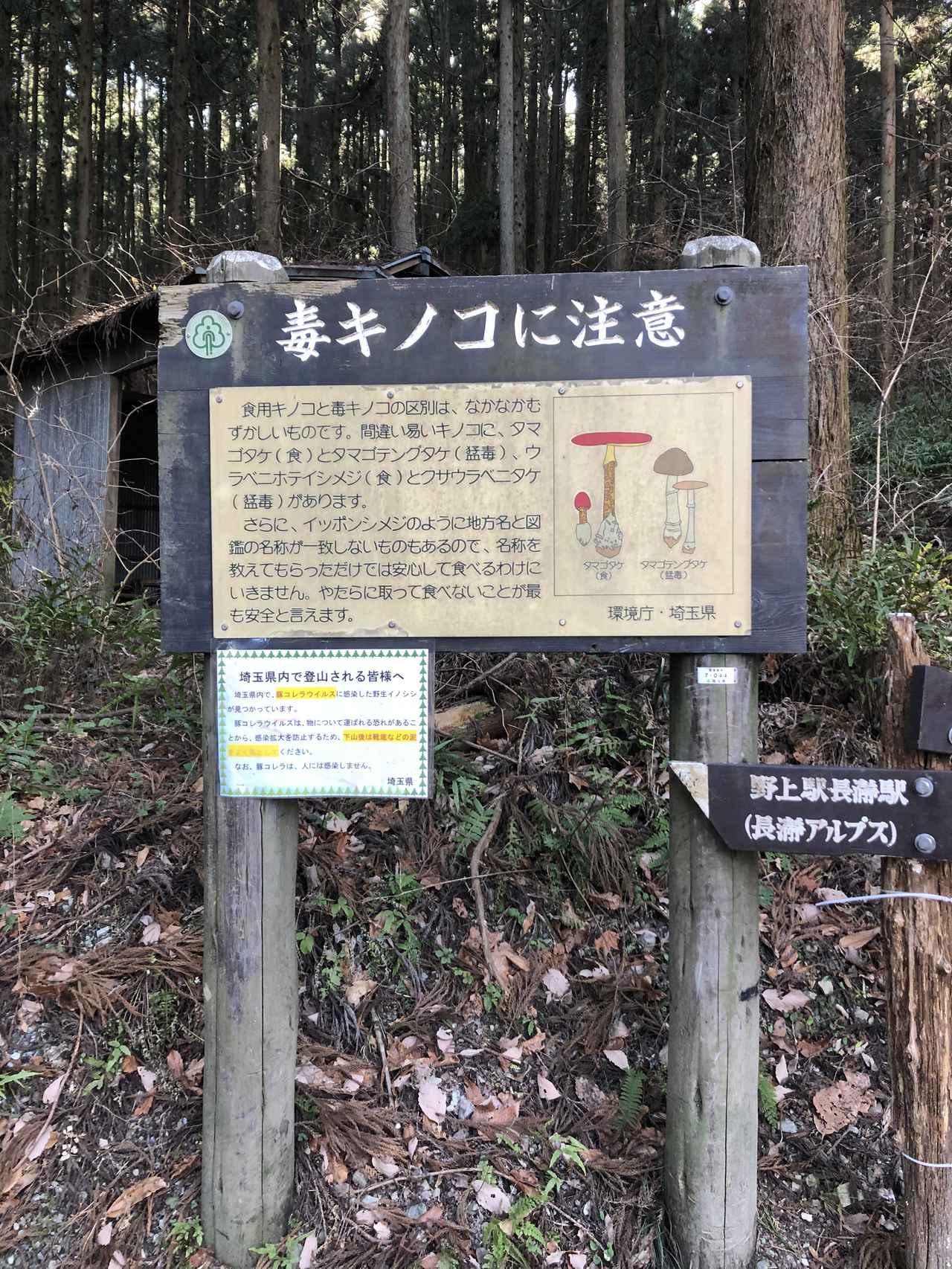 画像6: 宝登山の蝋梅(ロウバイ)|見頃・アクセス・登山道を紹介【登山・ハイキング初心者におすすめ】