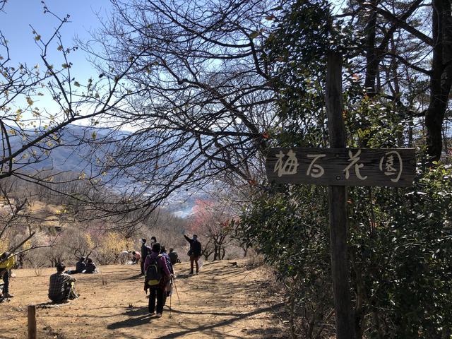 画像7: 宝登山の蝋梅(ロウバイ)|見頃・アクセス・登山道を紹介【登山・ハイキング初心者におすすめ】
