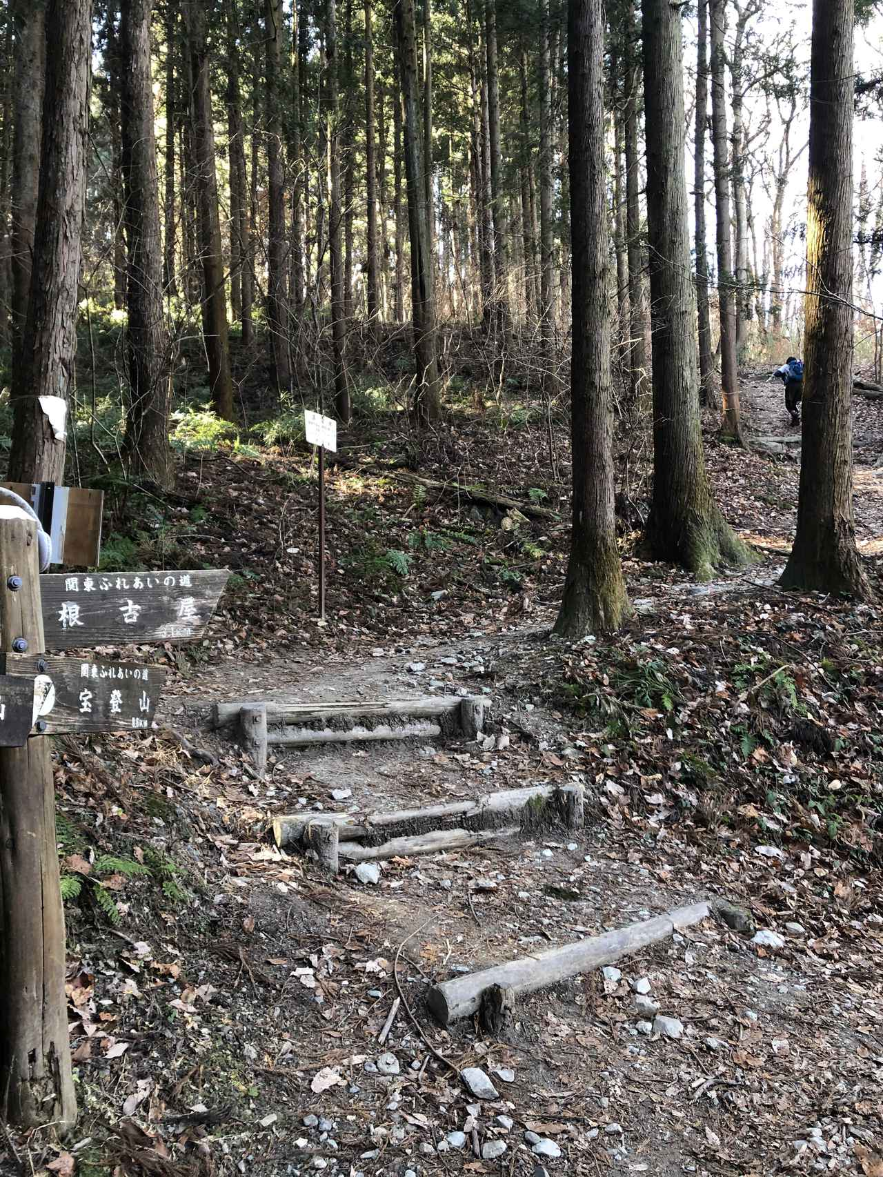 画像5: 宝登山の蝋梅(ロウバイ)|見頃・アクセス・登山道を紹介【登山・ハイキング初心者におすすめ】