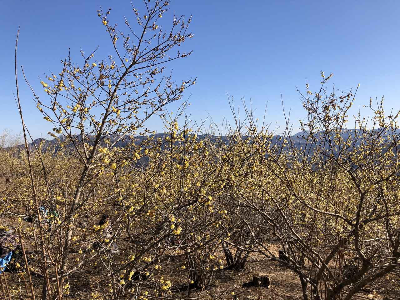 画像: 東ろうばい園は梅林に近づくことが出来ました(Fujifilm XT-200撮影)