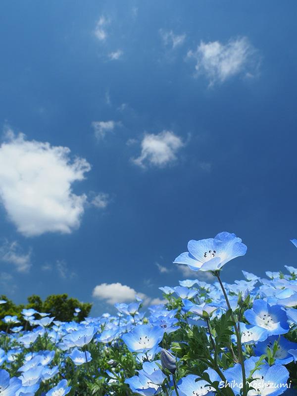 画像: 標準ズームレンズで撮影/Shiho Yoshizumi