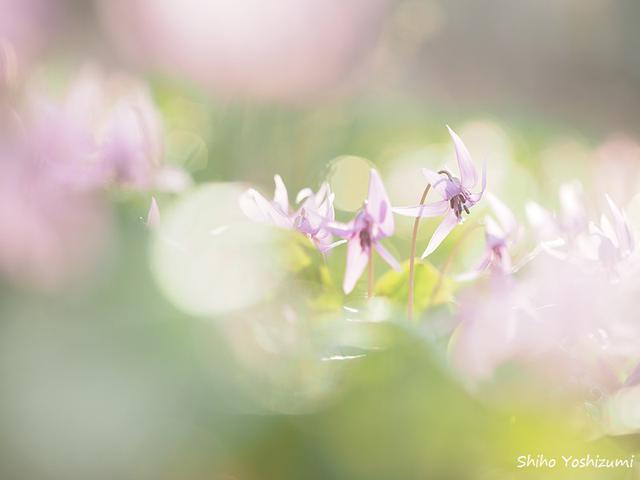 画像1: 望遠ズームレンズで撮影/Shiho Yoshizumi