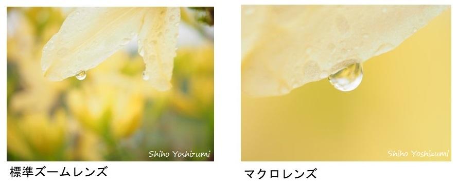 画像: ③マクロレンズ【M.ZUIKO DIGITAL ED 60mm F2.8 Macro】
