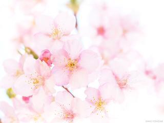 【動画で分かりやすく解説】2021年春・光とホワイトバランスを操り 桜をきれいに撮影するポイント