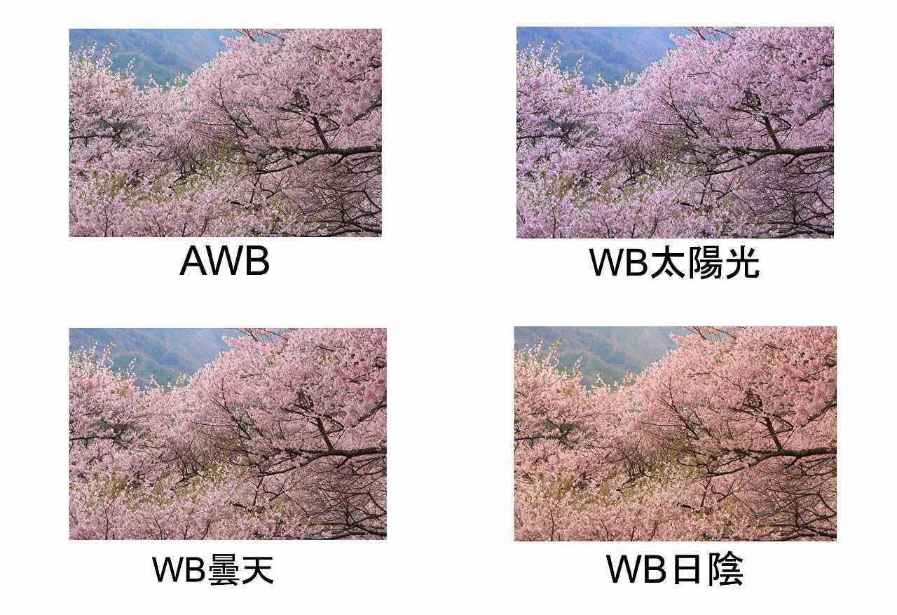 画像: ©Shiho Yoshizumi