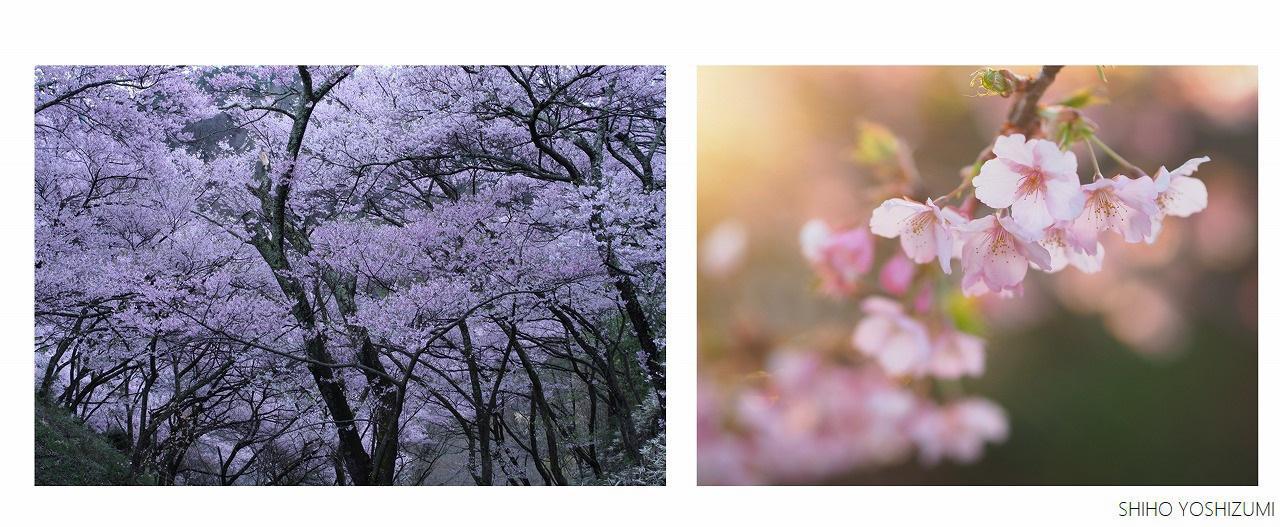 画像: 左の写真は明け方/右の写真は夕方に撮影 ©Shiho Yoshizumi