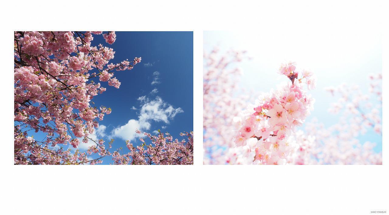 画像: 左の写真は順光/右の写真は逆光で撮影 ©Shiho Yoshizumi