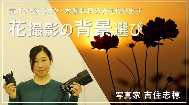 画像: 花が引き立つ背景選び youtu.be