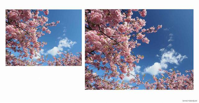画像: 左の写真は通常/右の写真はPLフィルター装着 ©Shiho Yoshizumi