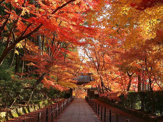 画像: 京都紅葉スポットのご紹介|京都・滋賀紅葉ツアー・旅行│クラブツーリズム