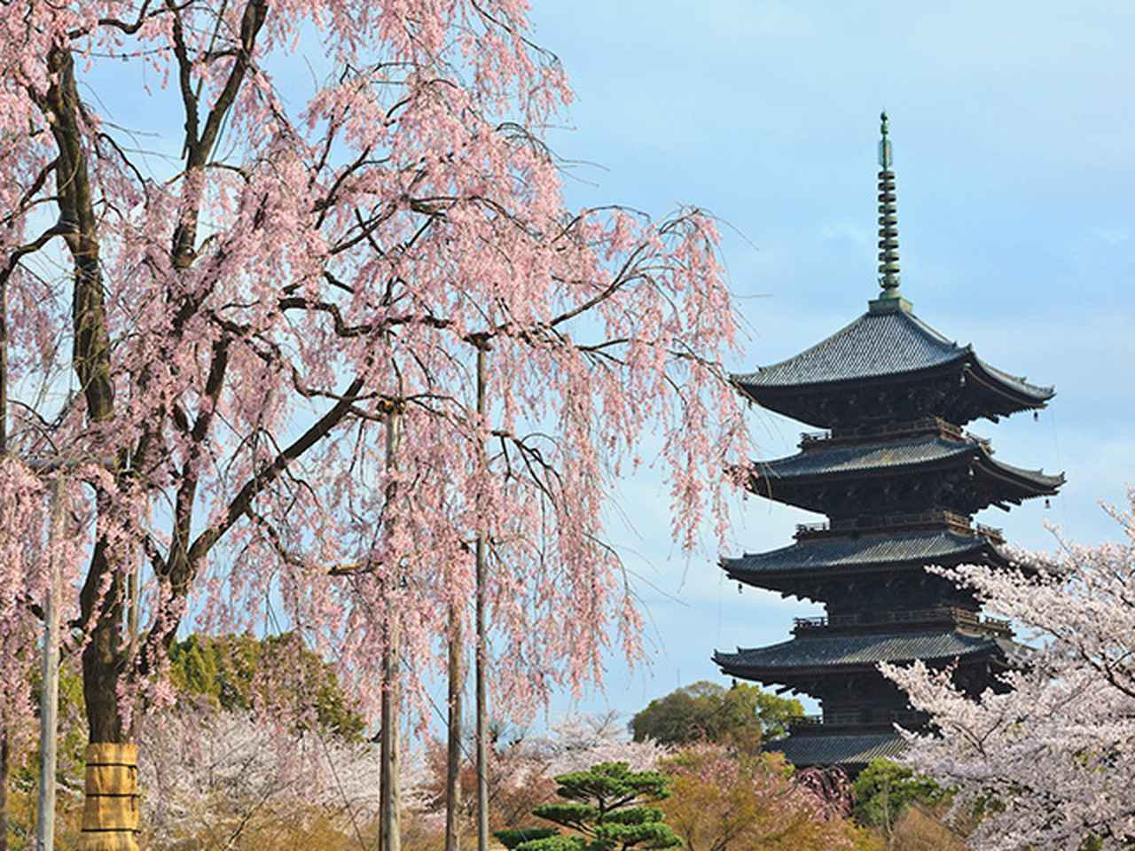 画像: 京都の桜と吉野千本桜ツアー・旅行【京都桜スポットのご紹介】│クラブツーリズム