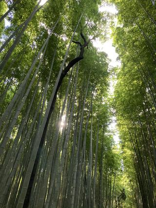 Instagram「京の旅ch」でご案内したツアー一覧