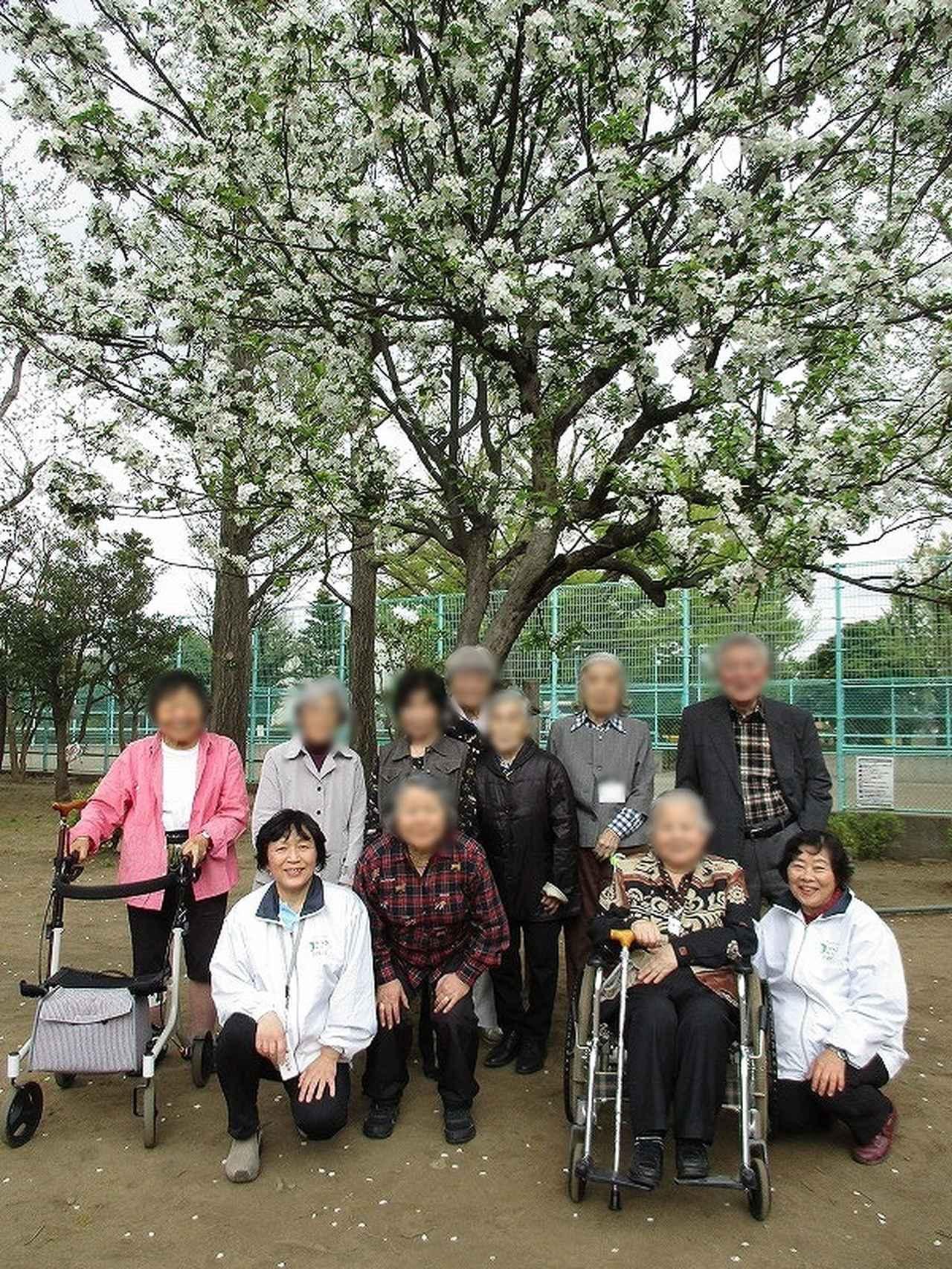 画像: 羽根木公園の桜