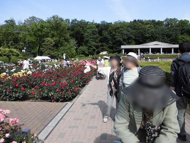 画像5: 神代植物園「春のバラフェスタ」