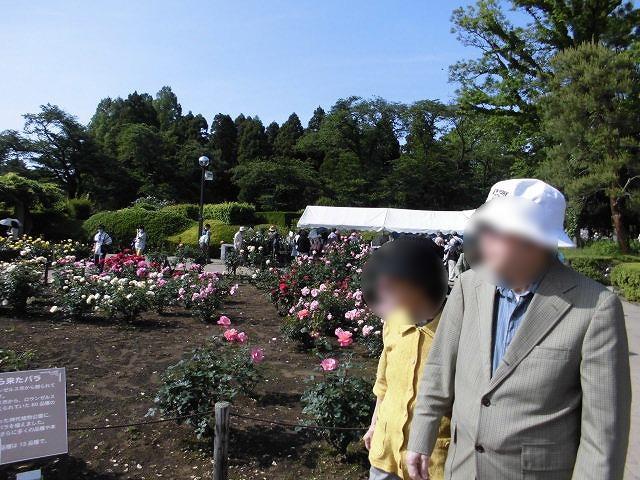 画像2: 神代植物園「春のバラフェスタ」