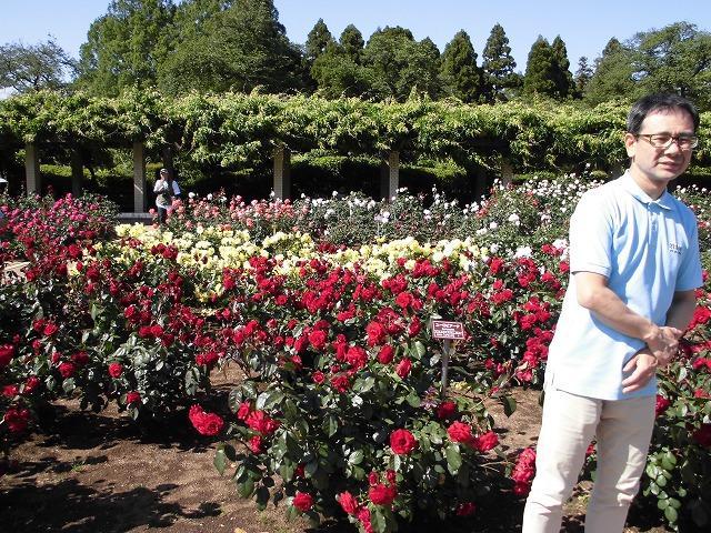 画像1: 神代植物園「春のバラフェスタ」