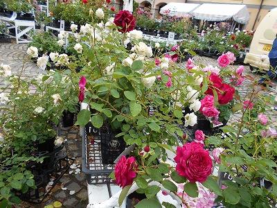 画像1: ハイジの村ではきれいなお花がいっぱい!! 皆それぞれで散策やお買物を楽しんでいました。