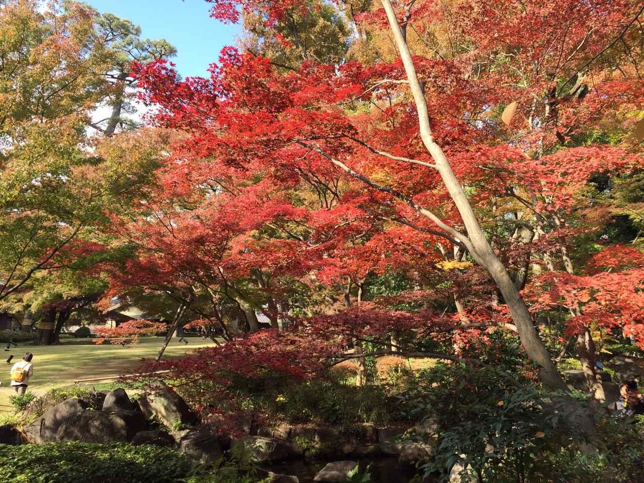 画像1: 大田黒公園と荻窪ルミネ