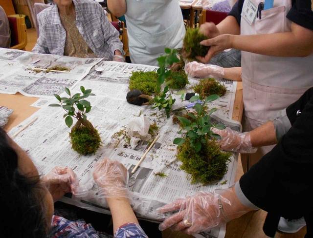 画像1: 苔玉作り