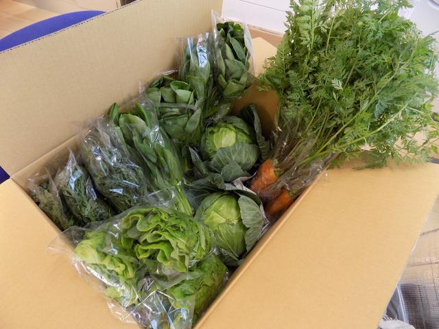 画像1: お野菜いっぱい届きました( ゚Д゚)