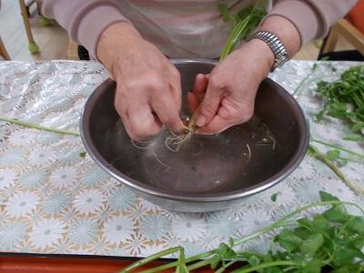 画像: セリは、根っこが美味しいのよと皆さんで手分けをして一つ一つ丁寧に 洗い