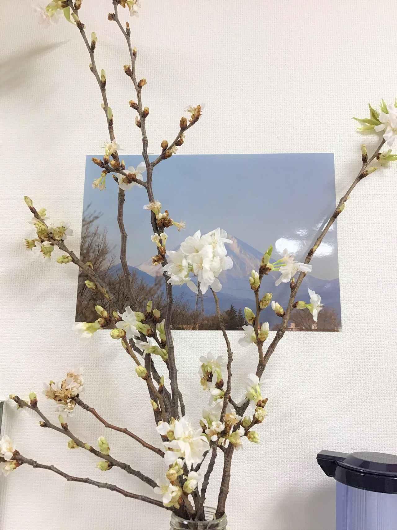 画像: 花のあるデイサービス(山桜)