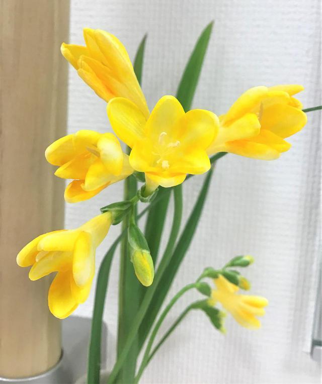 画像: 花のあるデイサービス(フリージア)