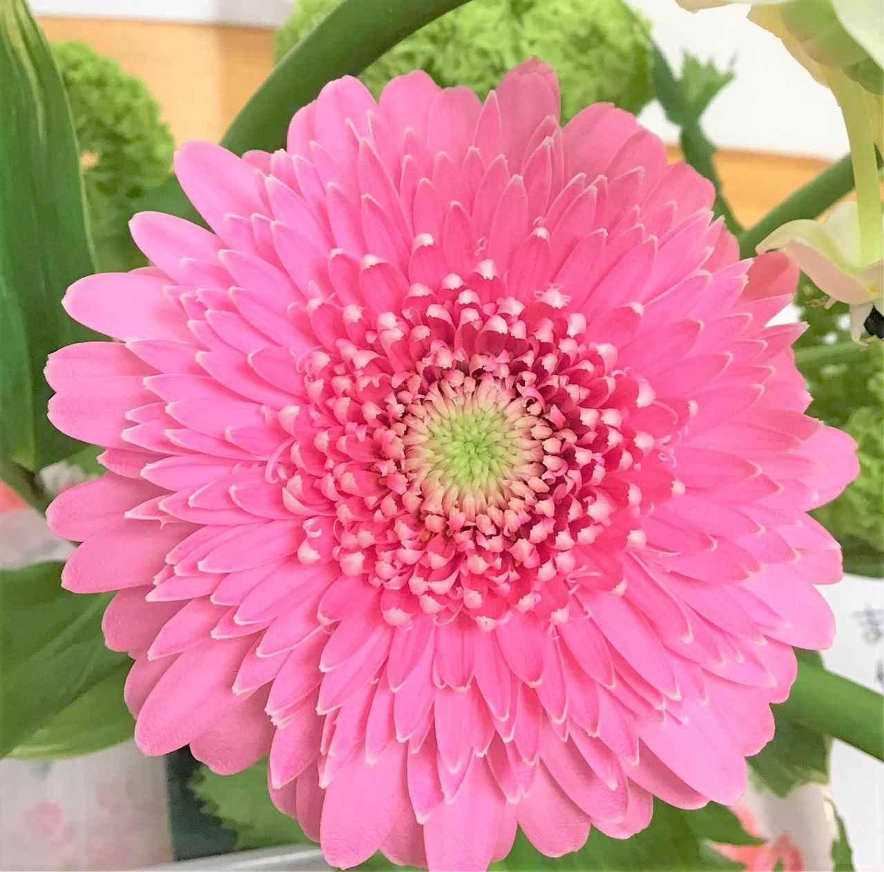 画像1: 『本日のお花たち』をご紹介。 ・ガーベラ(トレーシー) ・オニソガラム(サンペルシー) ・ビバーナム(スノーボール) ・ナルコラン