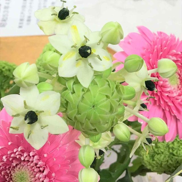 画像2: 『本日のお花たち』をご紹介。 ・ガーベラ(トレーシー) ・オニソガラム(サンペルシー) ・ビバーナム(スノーボール) ・ナルコラン