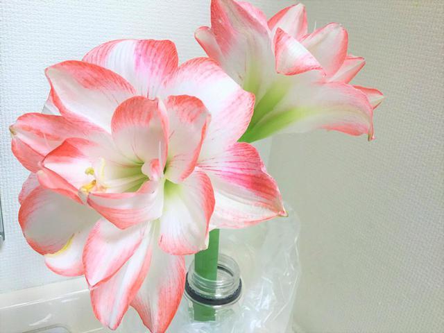 画像: 花のあるデイサービス(アマリリス)