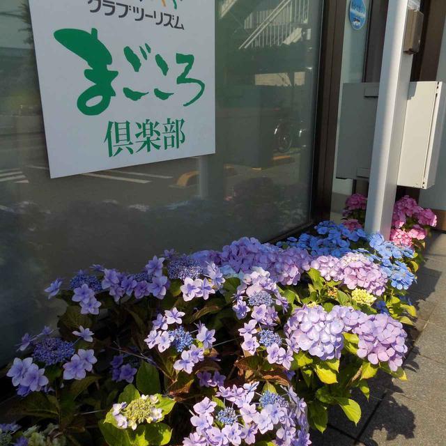 画像: 季節のお花