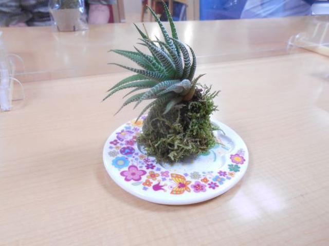 画像2: まごころ俱楽部高井戸 手工芸「苔玉づくり」