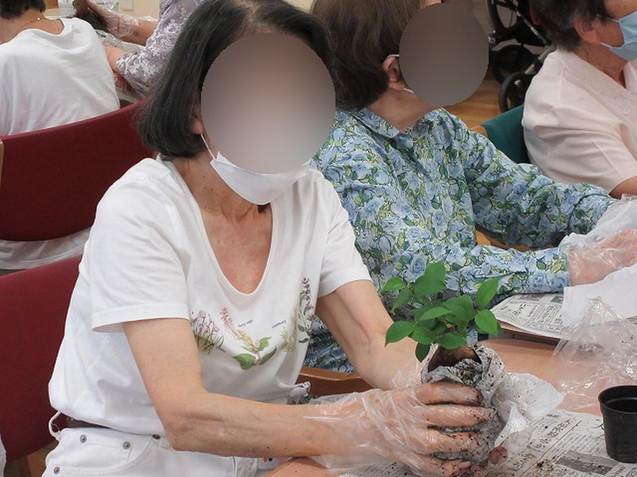 画像5: 苔玉作り