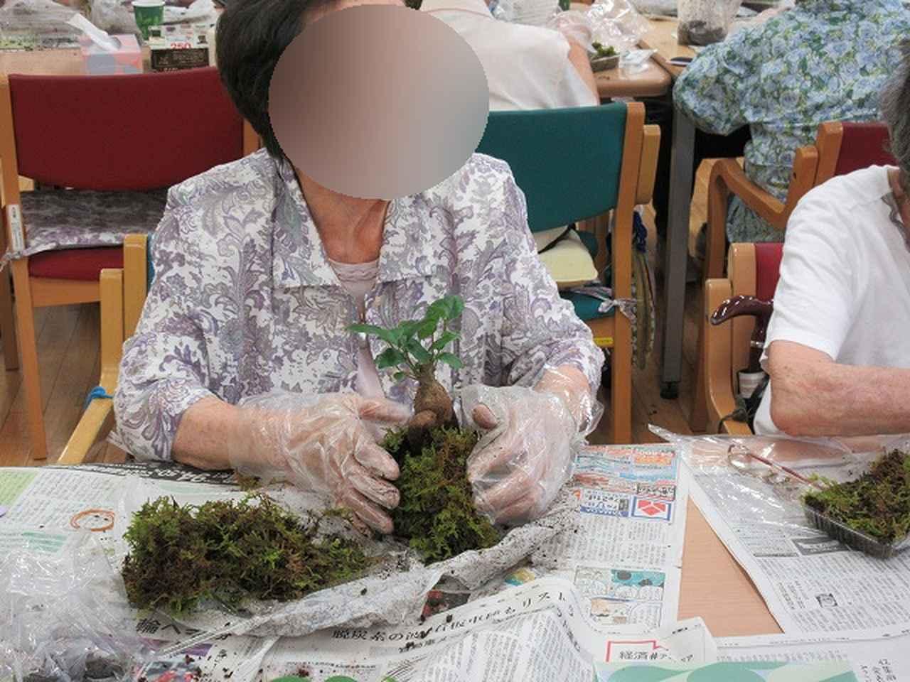 画像6: 苔玉作り