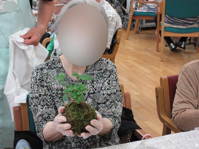 画像7: 苔玉作り