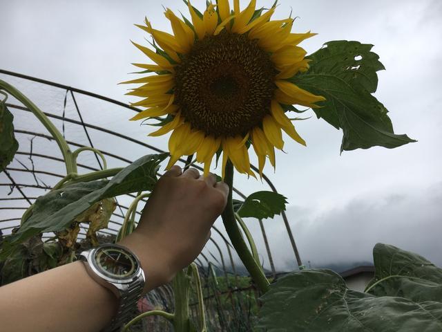 画像: WatchLIFE.jp