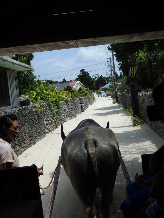 画像: タイムスリップ!原風景が残る『竹富島』で水牛車体験-沖縄旅行激安予約サイトの沖縄旅予約ドットコム
