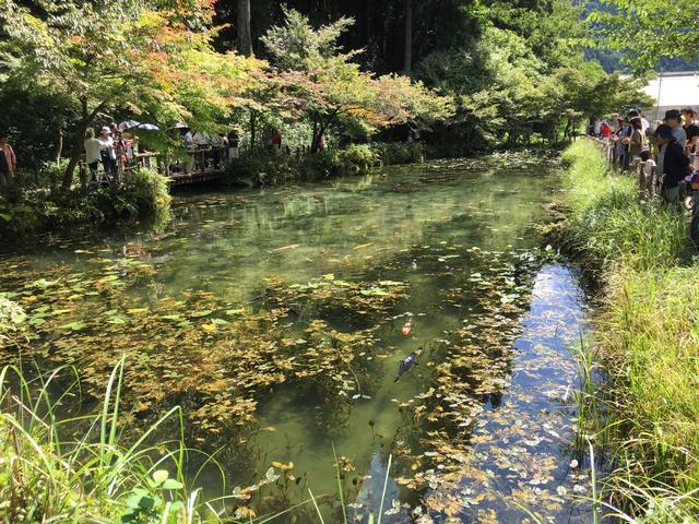画像6: モネの池 ★岐阜県関市