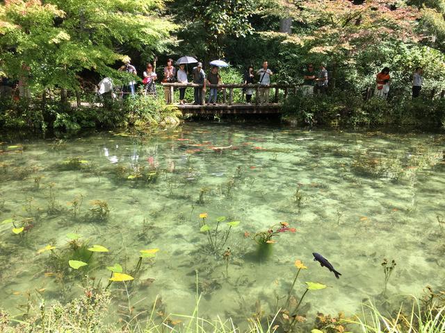 画像7: モネの池 ★岐阜県関市