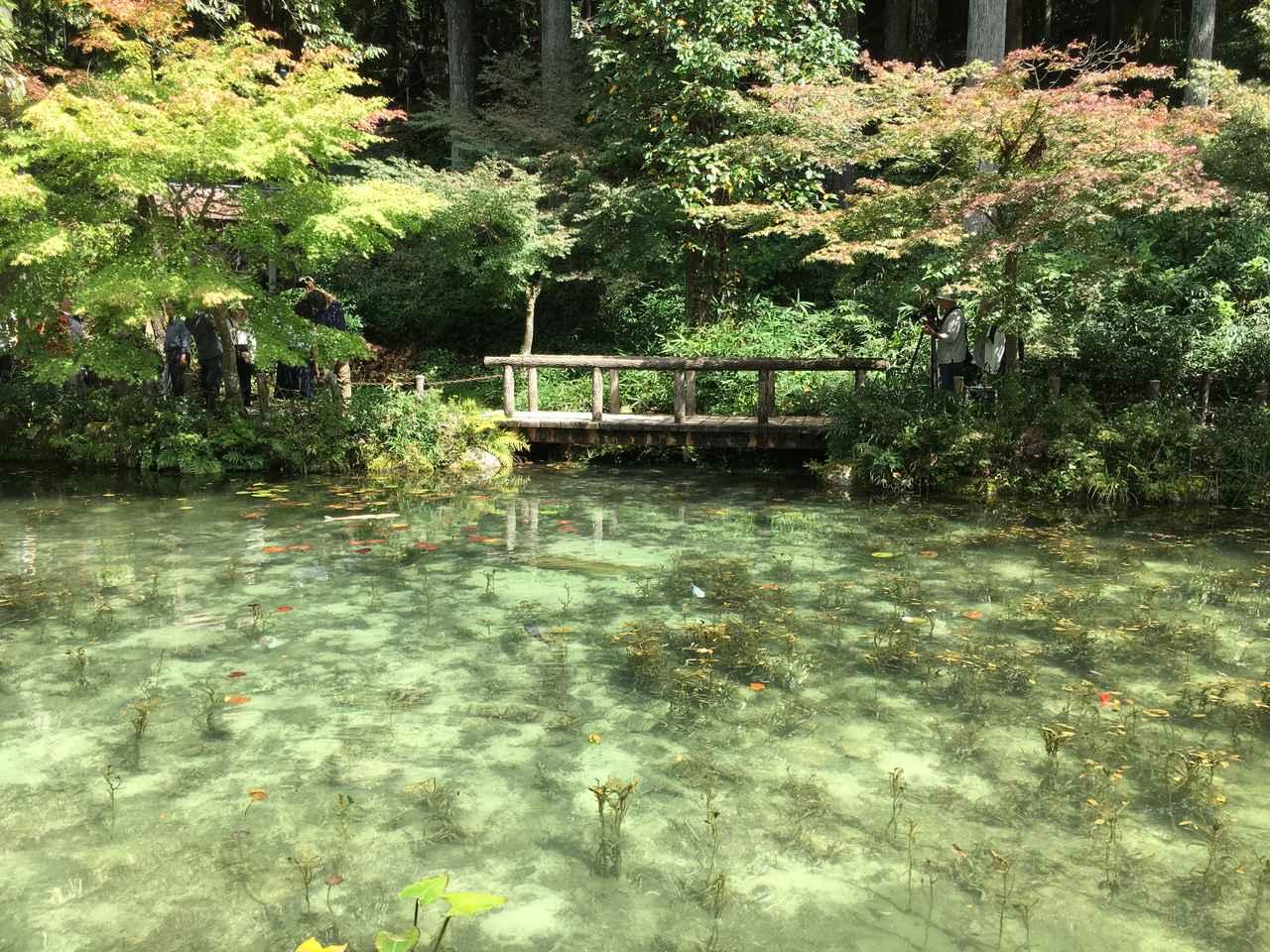 画像14: モネの池 ★岐阜県関市