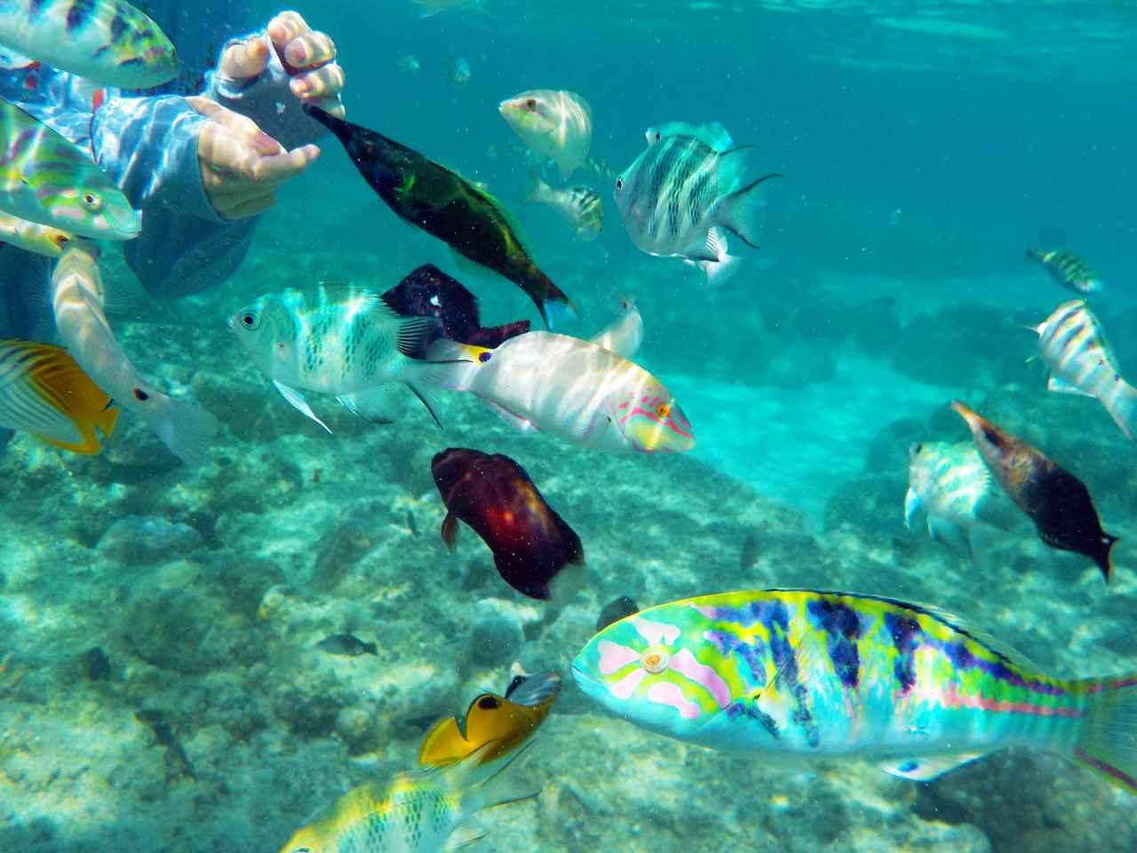 画像: 魚の種類と数が自慢!新城海岸でお魚と友達になろう(*'ω'*)-沖縄旅行激安予約サイトの沖縄旅予約ドットコム