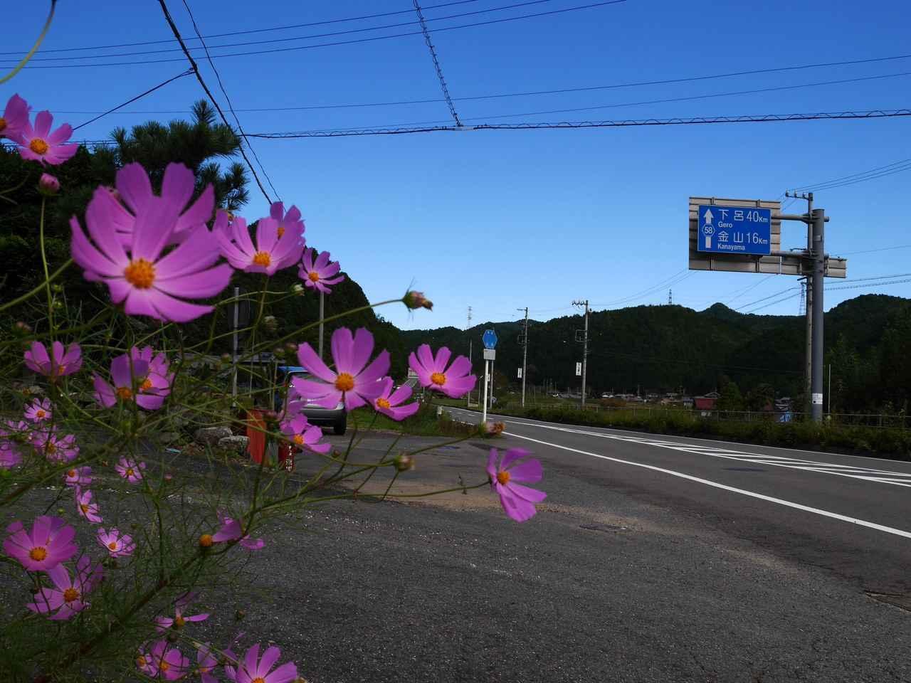 画像1: 鶏ちゃん杉の子 ★岐阜県下呂市