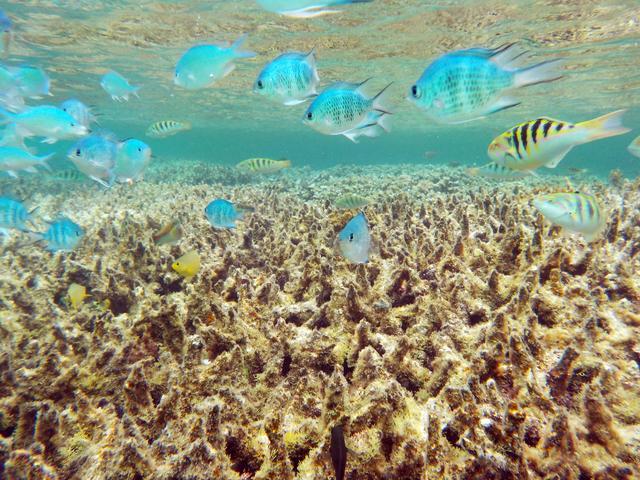画像: 宮古島で1番のお気に入り!フナクスビーチでシュノーケル – 沖縄旅行・激安ツアー沖縄旅予約ドットコム