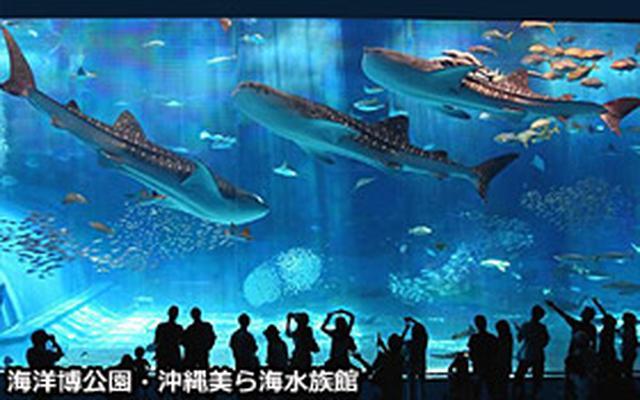 画像2: 沖縄、北海道をはじめ国内旅行がとにかく安い‐旅予約ドットコム