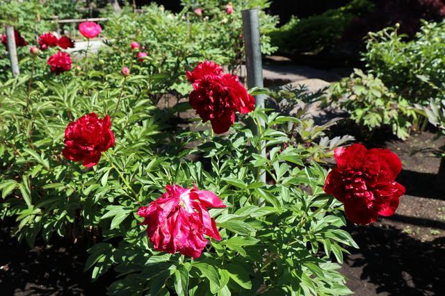 画像2: 美しく咲き乱れる花々も必見
