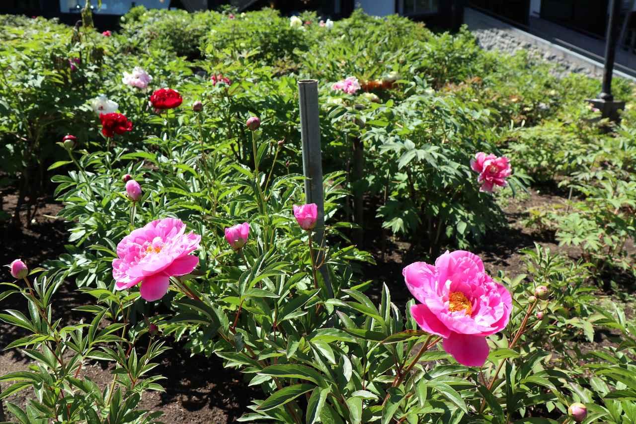 画像3: 美しく咲き乱れる花々も必見