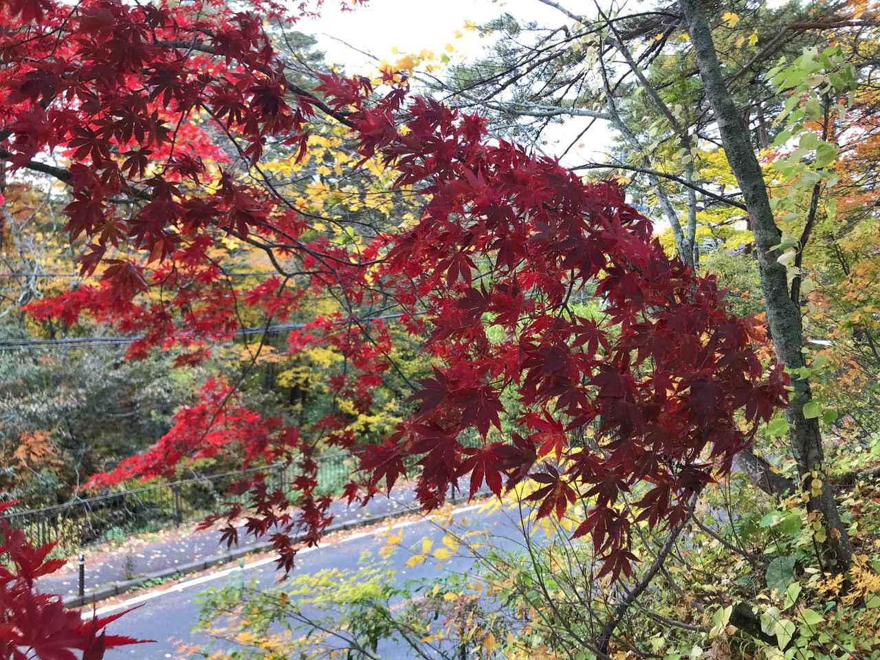 画像: レッカーでクルマを搬送した後はアイドルタイムが発生することも。錦秋の奥会津なら、そんな時間も神様がくれたご褒美?と思えるほど。豊かな色彩と、木々の香りで包まれる。